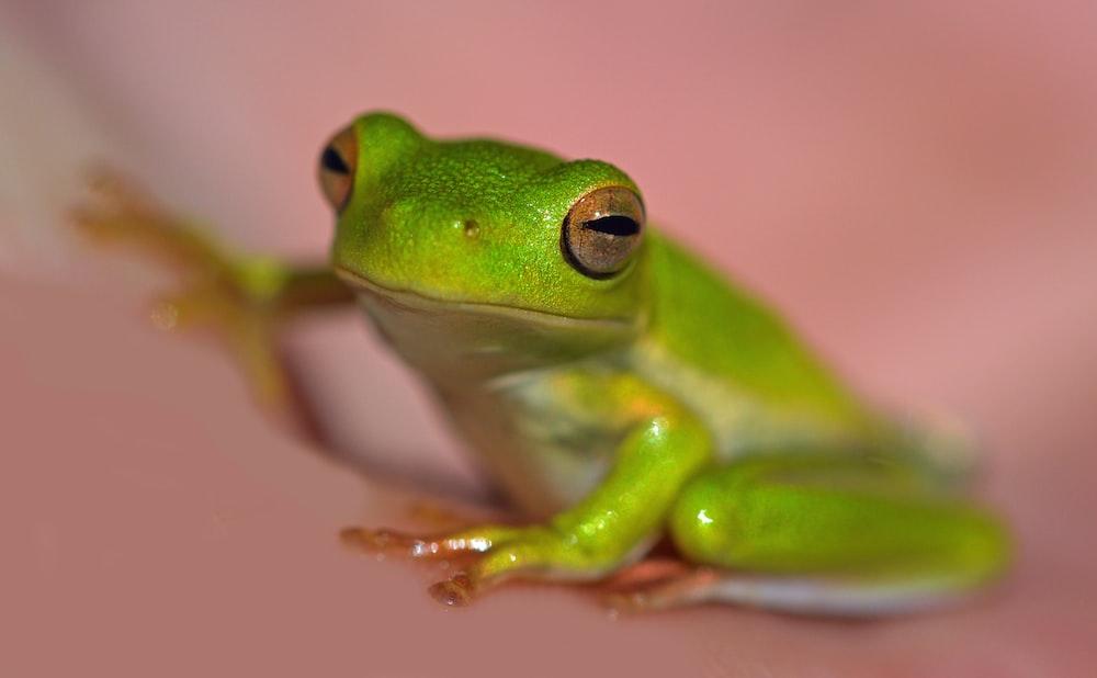 macro photography of green frog