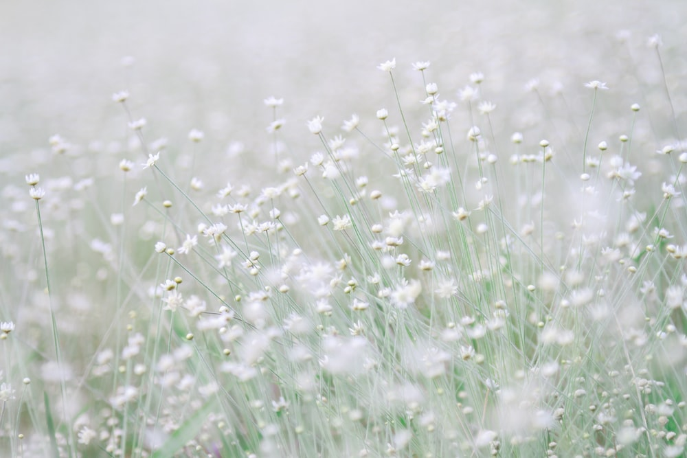 photo of white flowers during daytime