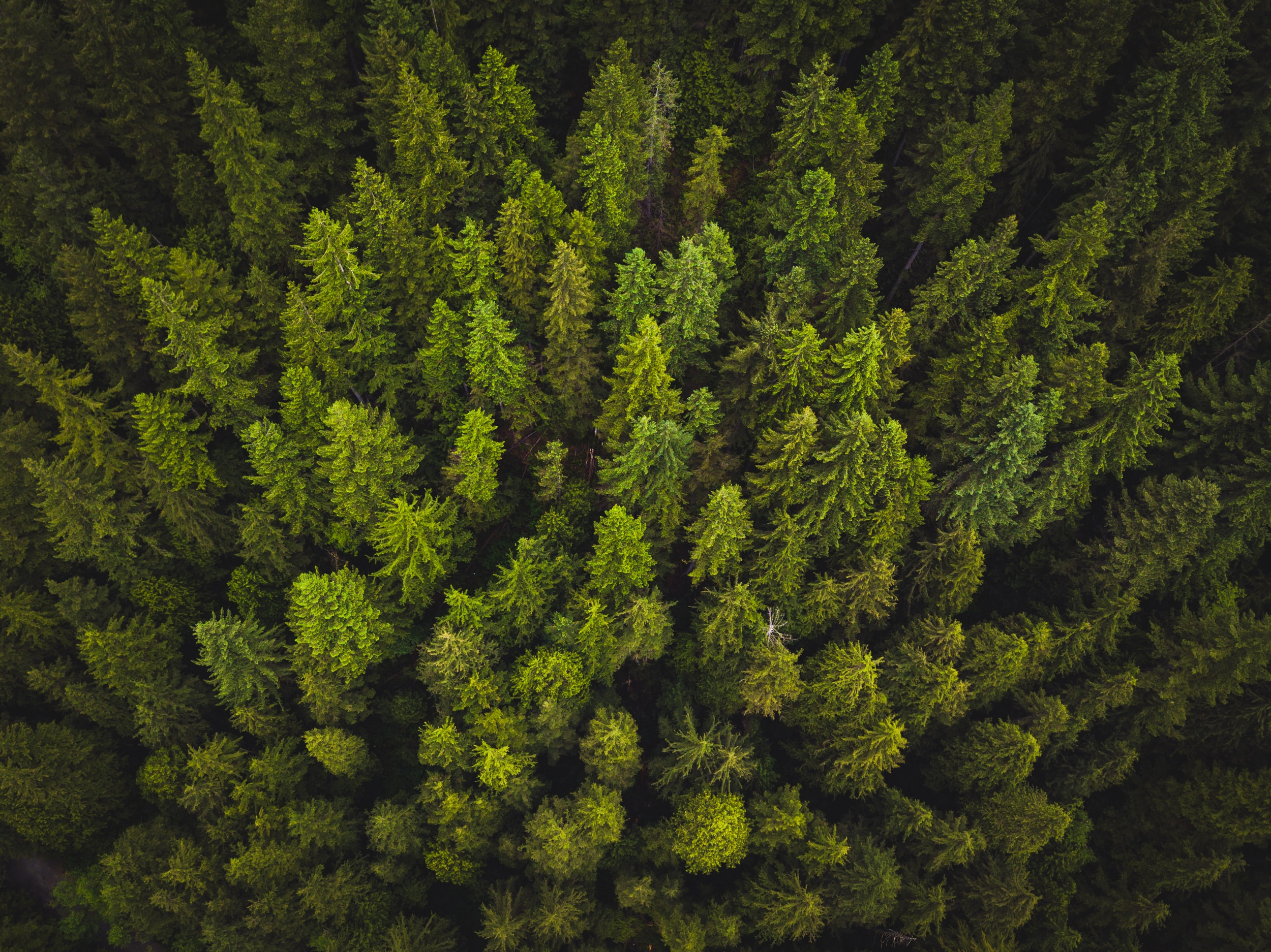 A drone shot of a green forest