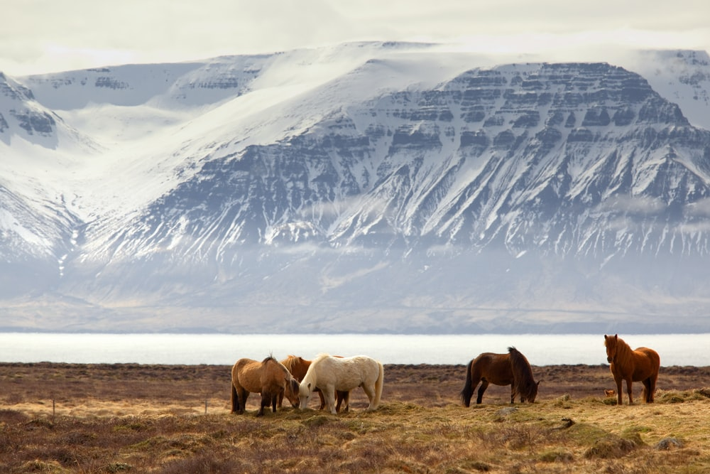 photography of five assorted-color horses on grass field in front of mountain