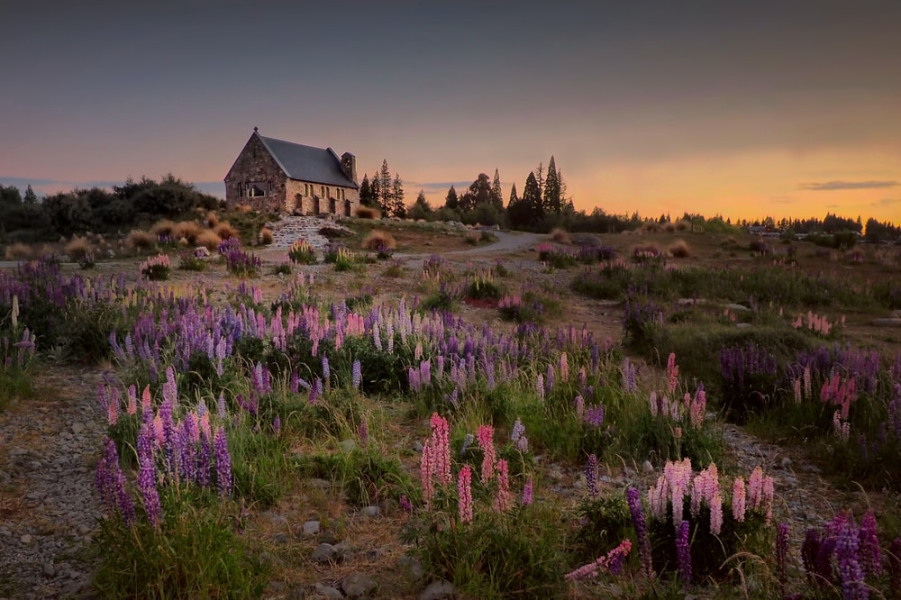 landscape photography of house between flowers