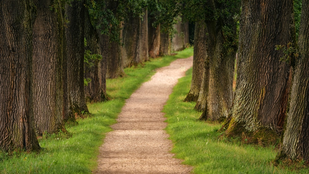 pathway of trees during daytime