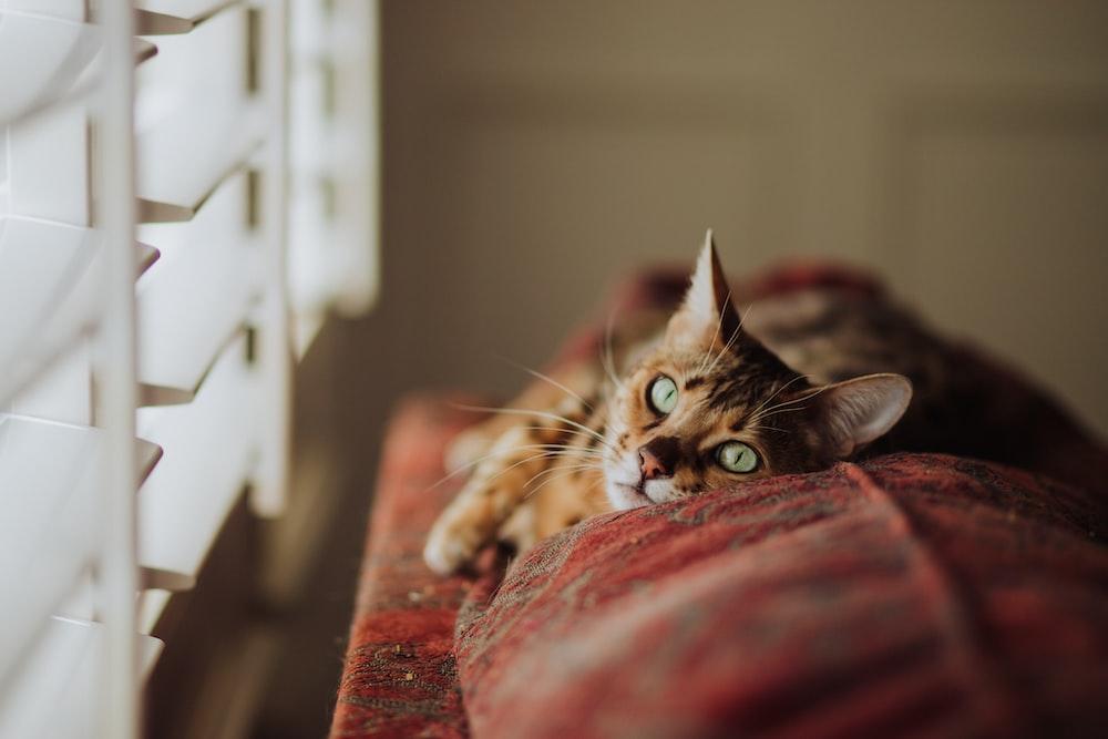 brown tabby cat near window