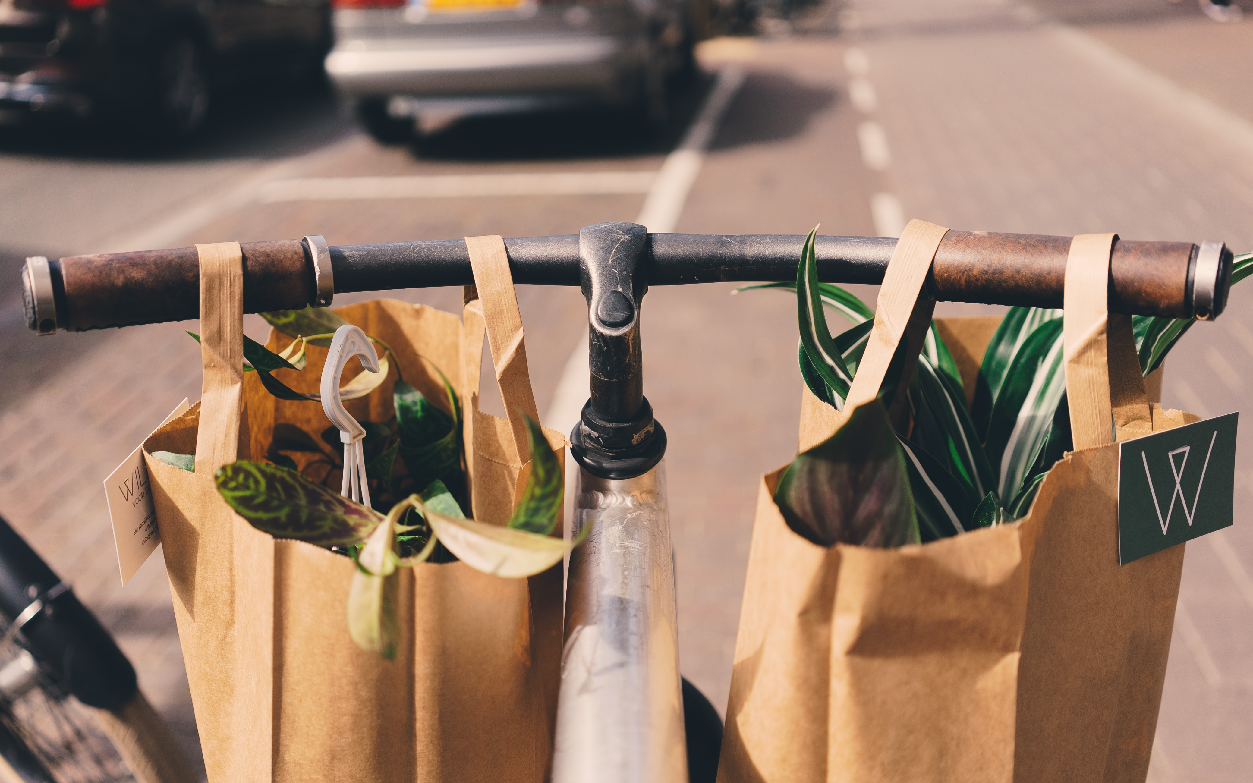 Paper bags of houseplants hang on the handlebars of a bicycle