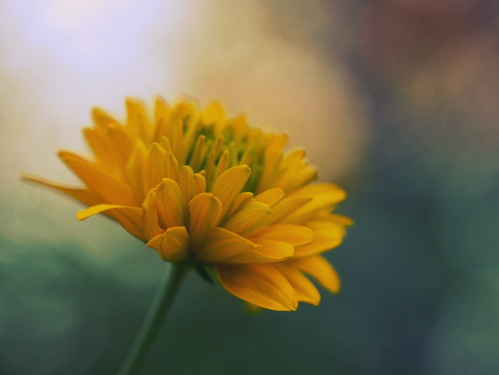 close-up photo of yellow petaled flower with shallow depth of field