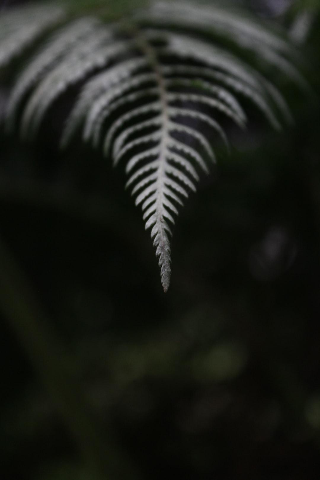 Fern leaf macro