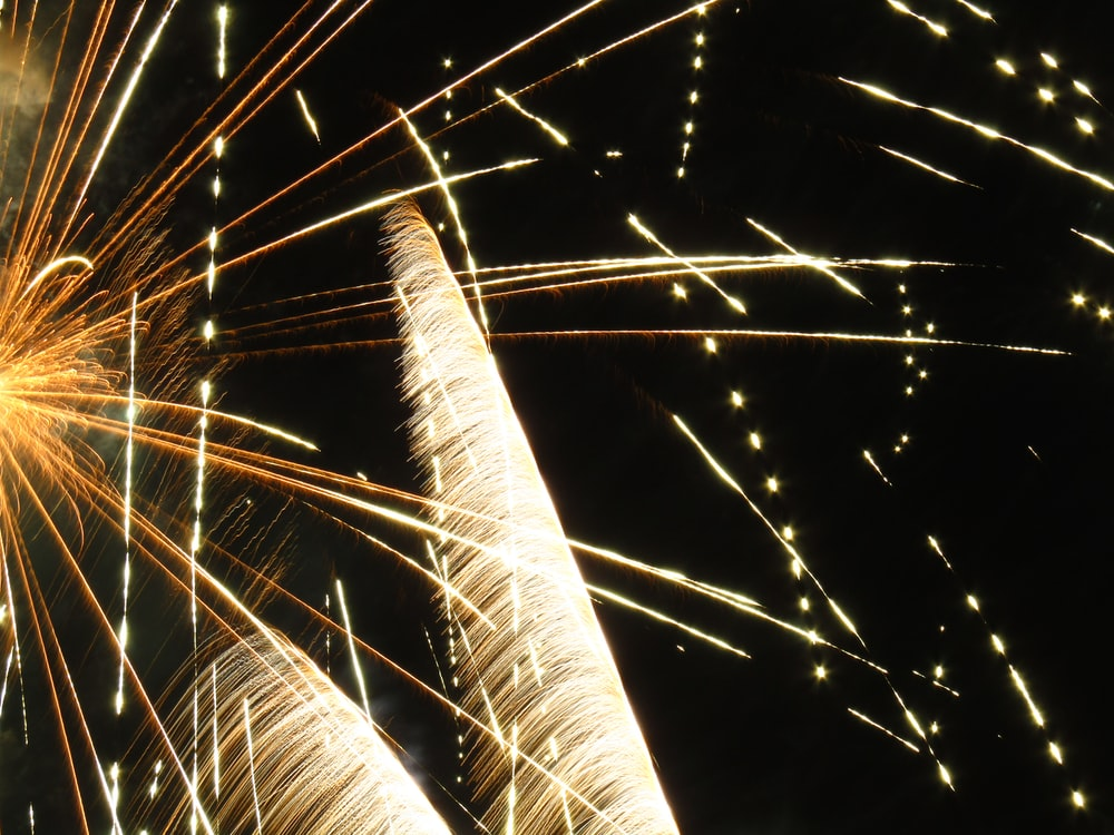 Bright fireworks and long leaves against a dark night sky