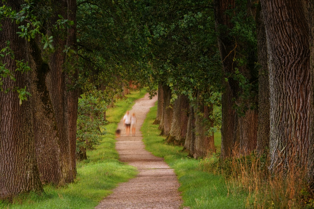 photo of two person walking beside green leaf trees