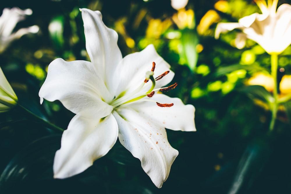 closeup photo of white 6-petaled flower