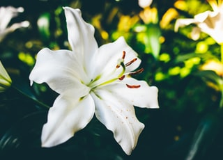 closeup photo of white 6-petaled flower