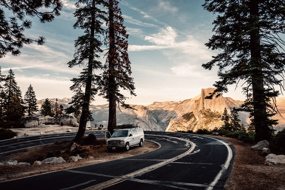 road and pine trees