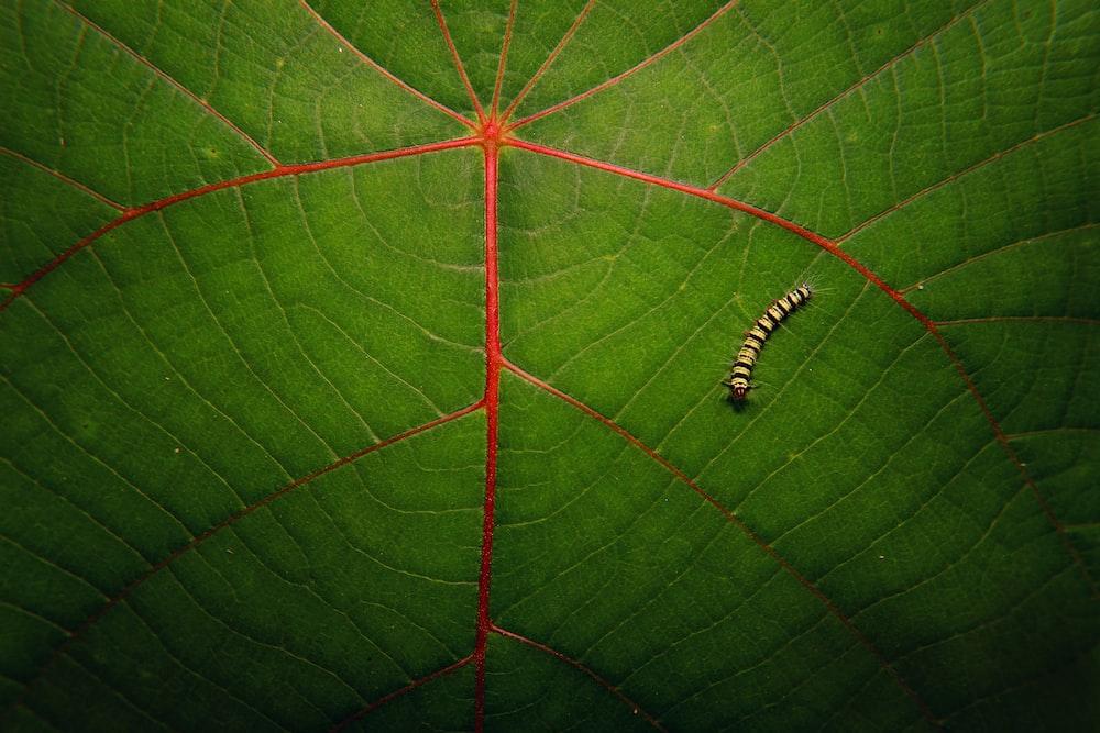 brown worm on green leaf