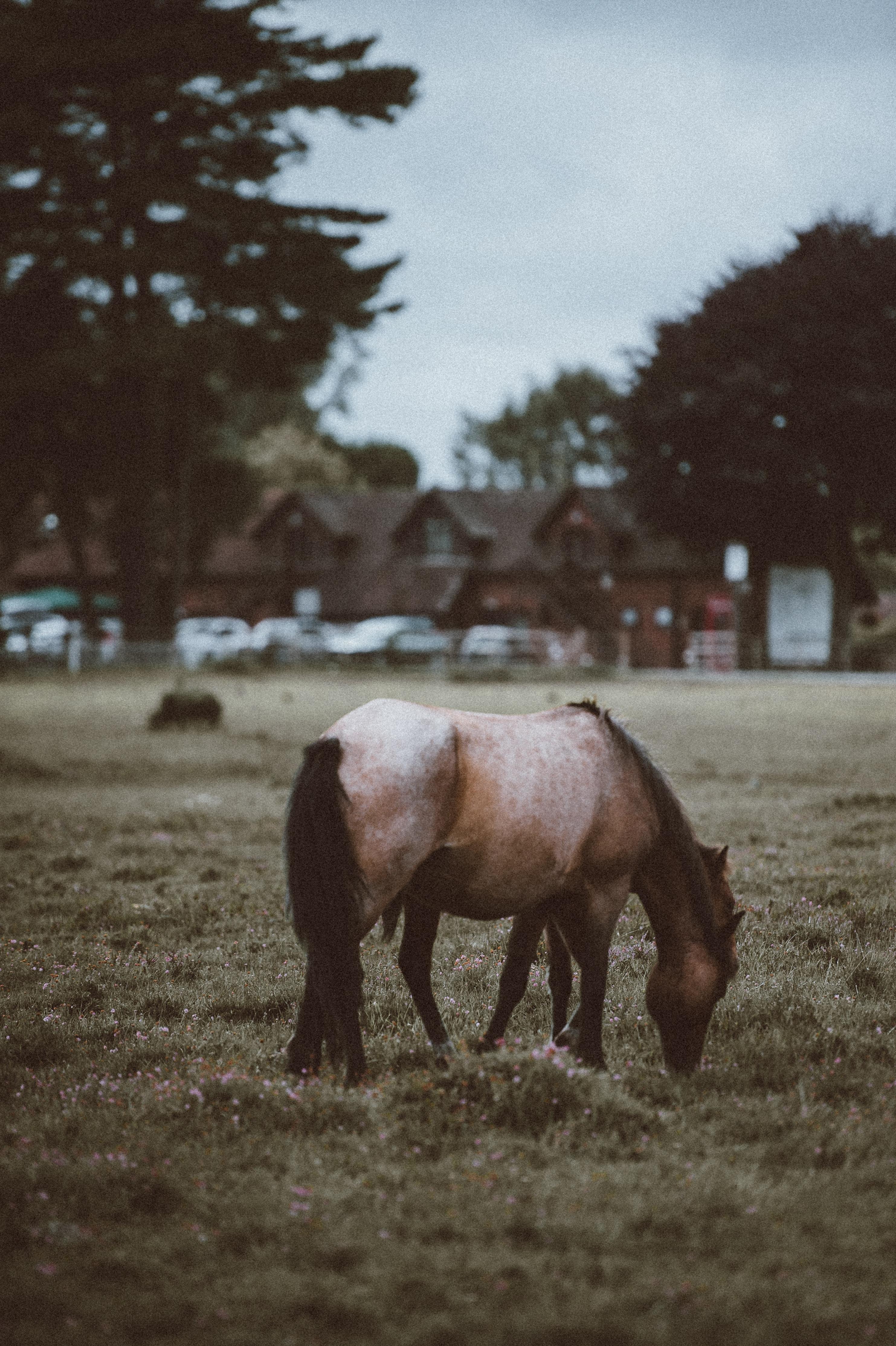horse eating grasse