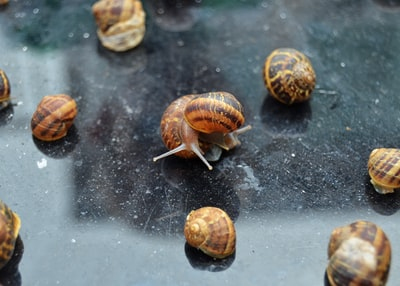 Each morning, our little ones would gather up dozens of snails and put them on our patio table and watch them take their trip back to the flower beds they came from.