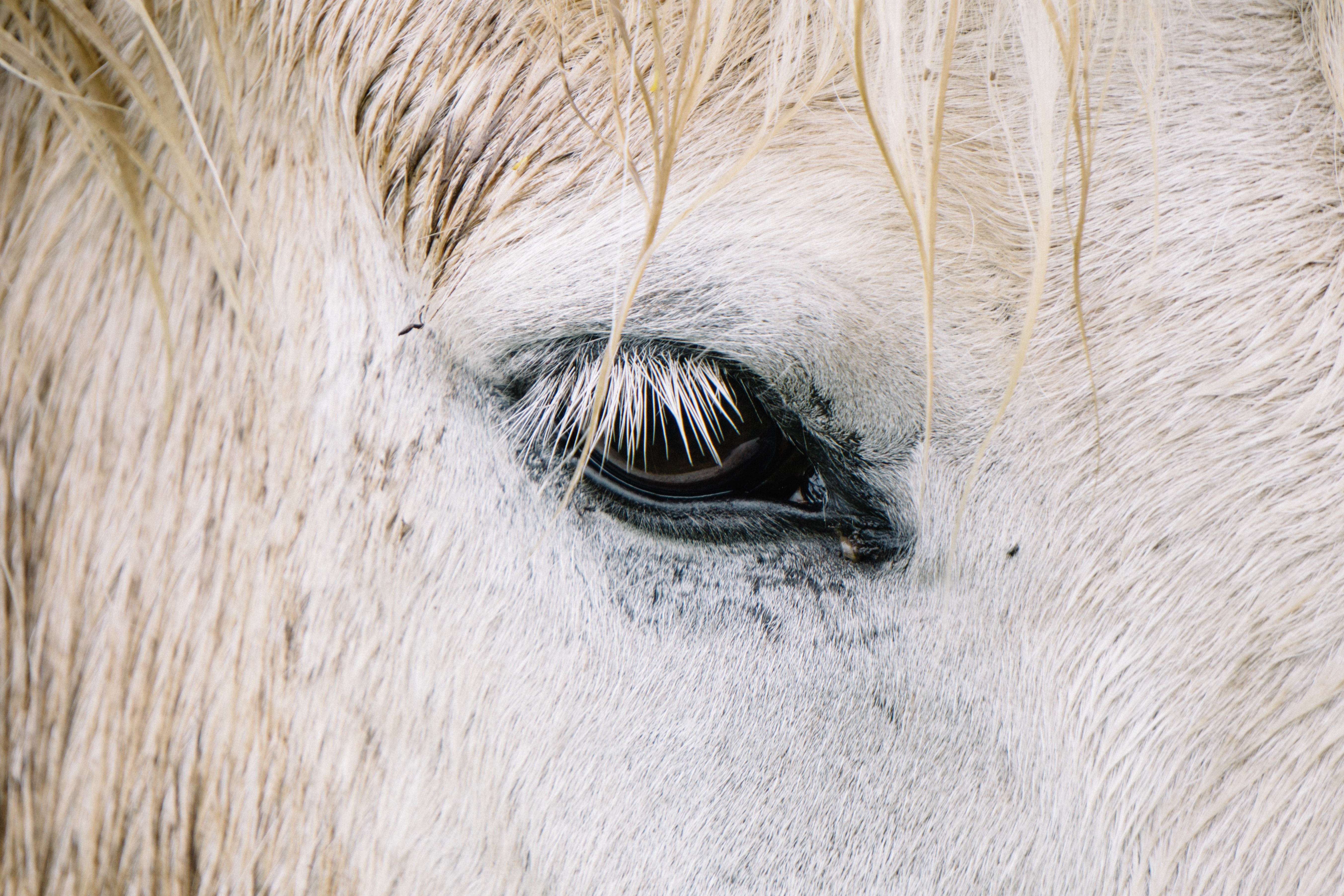 focus photography of horse eye