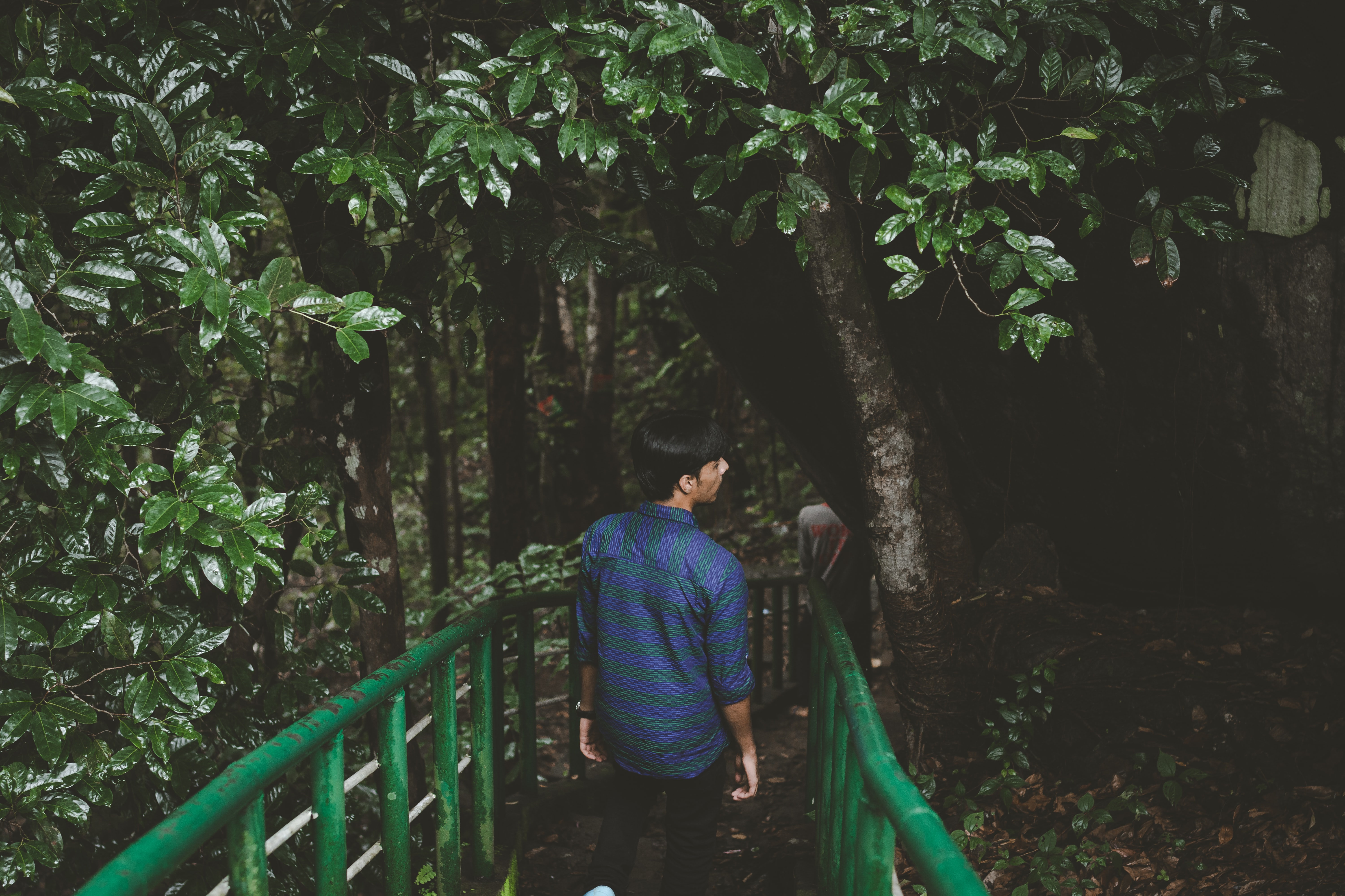 A person walks down a path with green railings through a vibrant forest