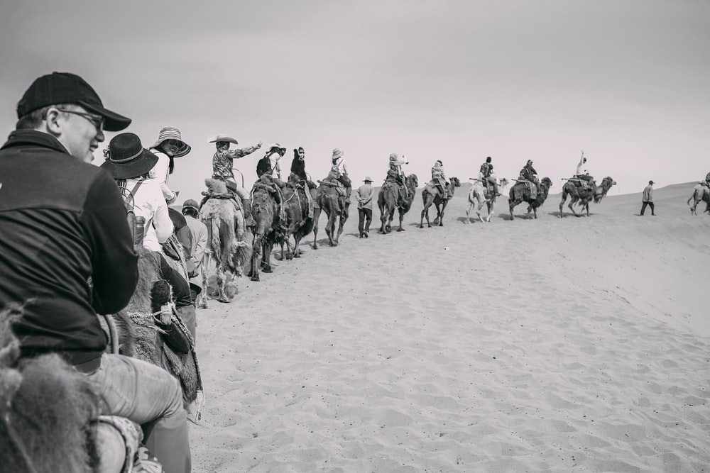 grayscale photo of group of person riding on camels