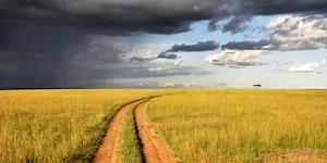 Walk on the fields