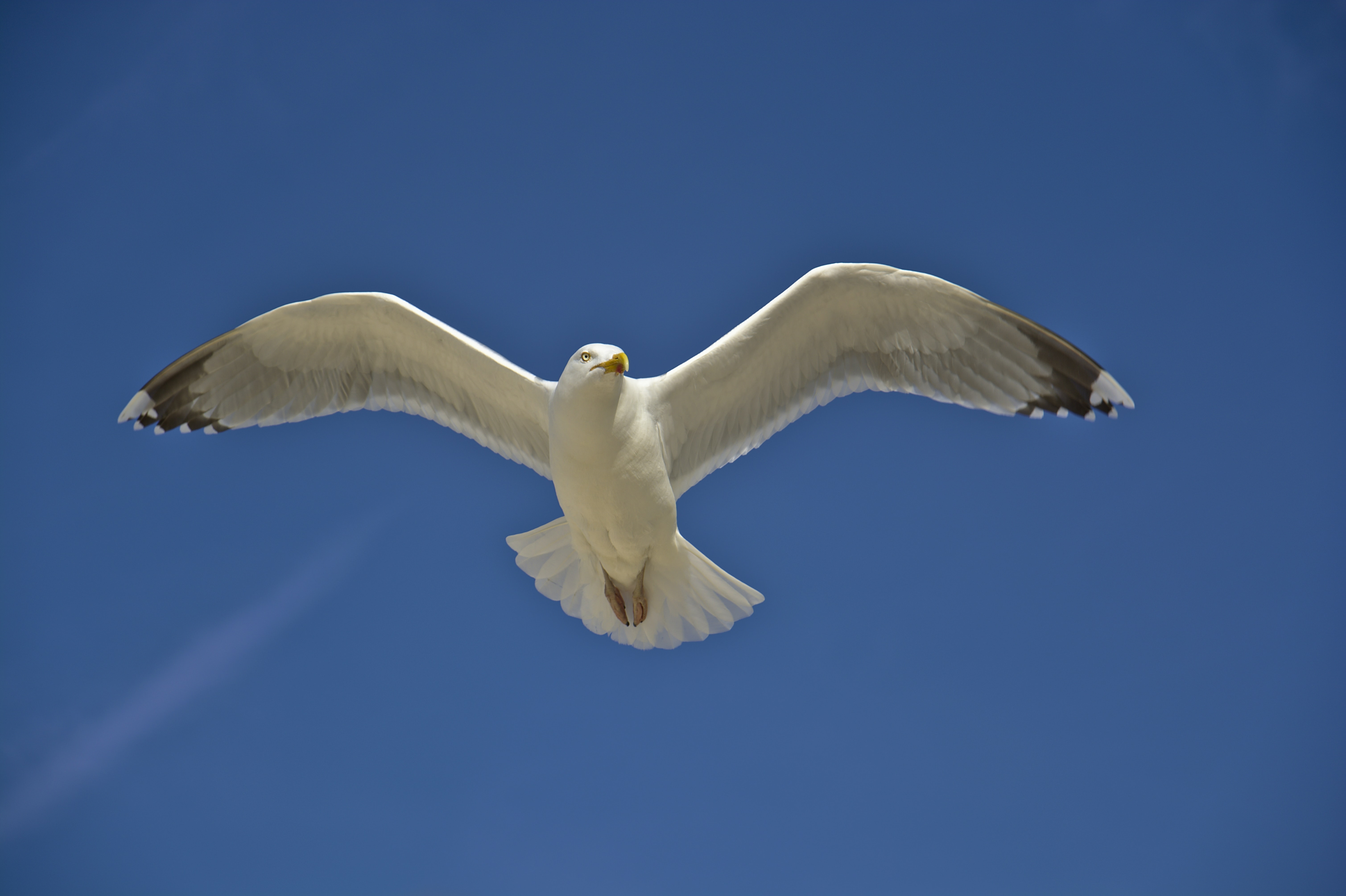 white bird spreading its wings