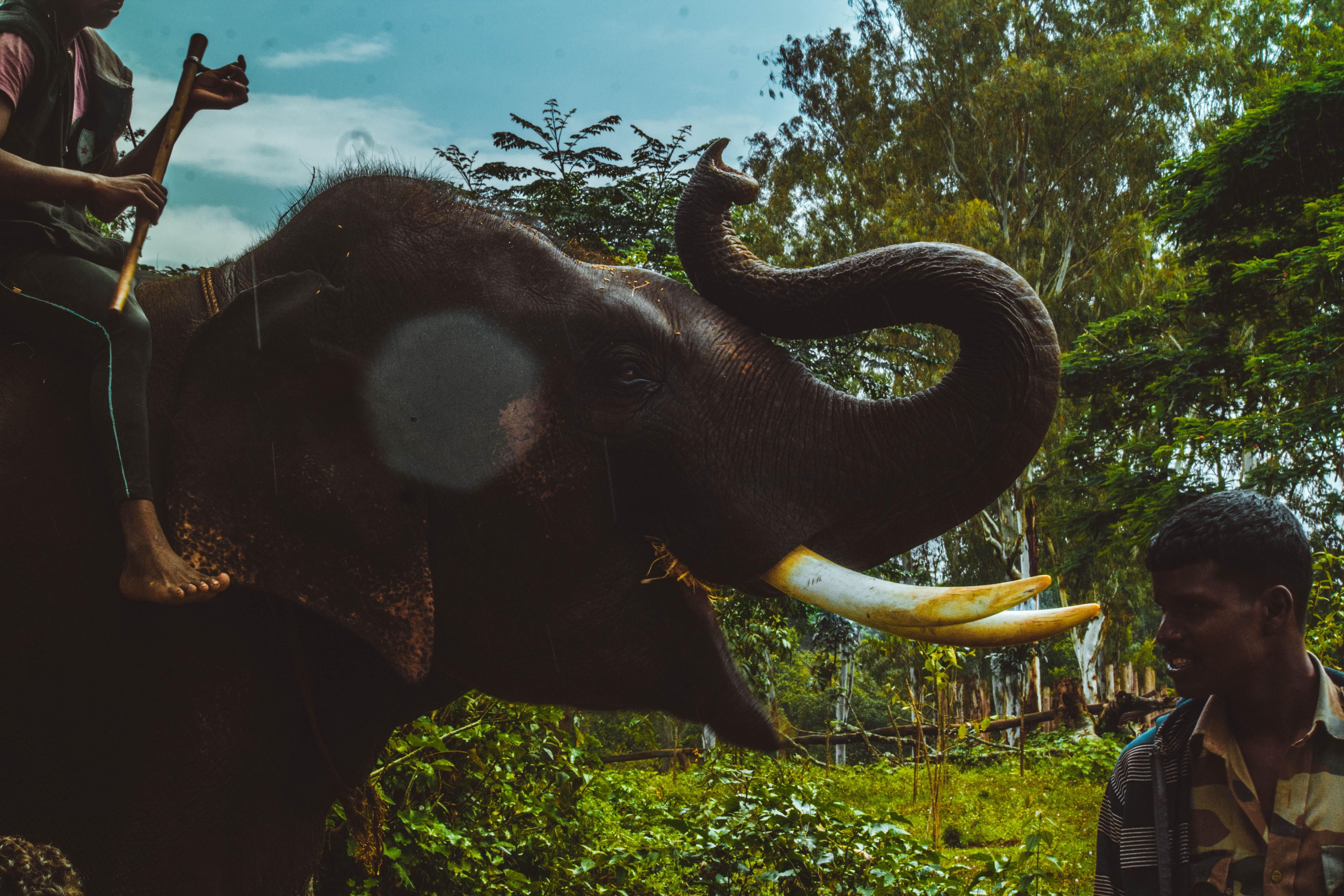 man wearing sport beside beside person riding elephant
