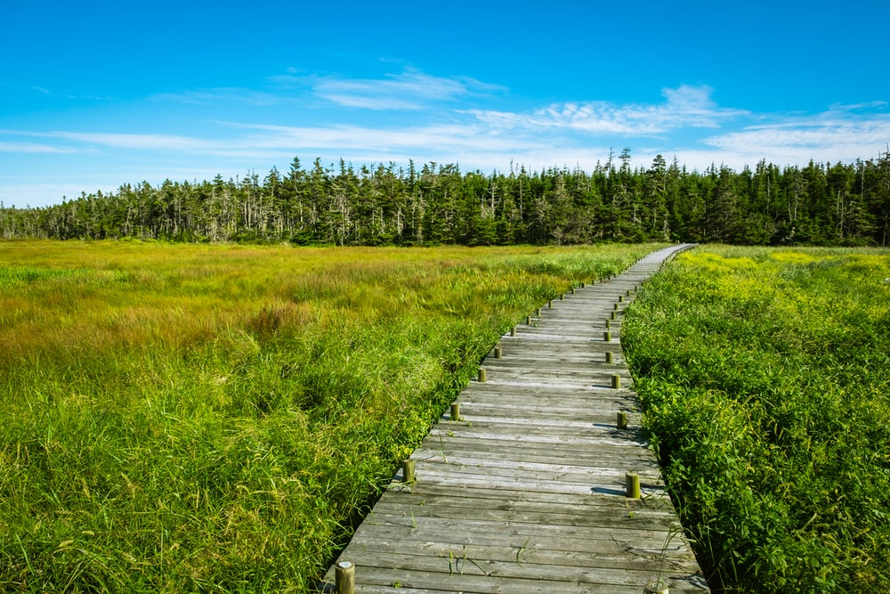 gray wooden dock near green field under blue and white skies
