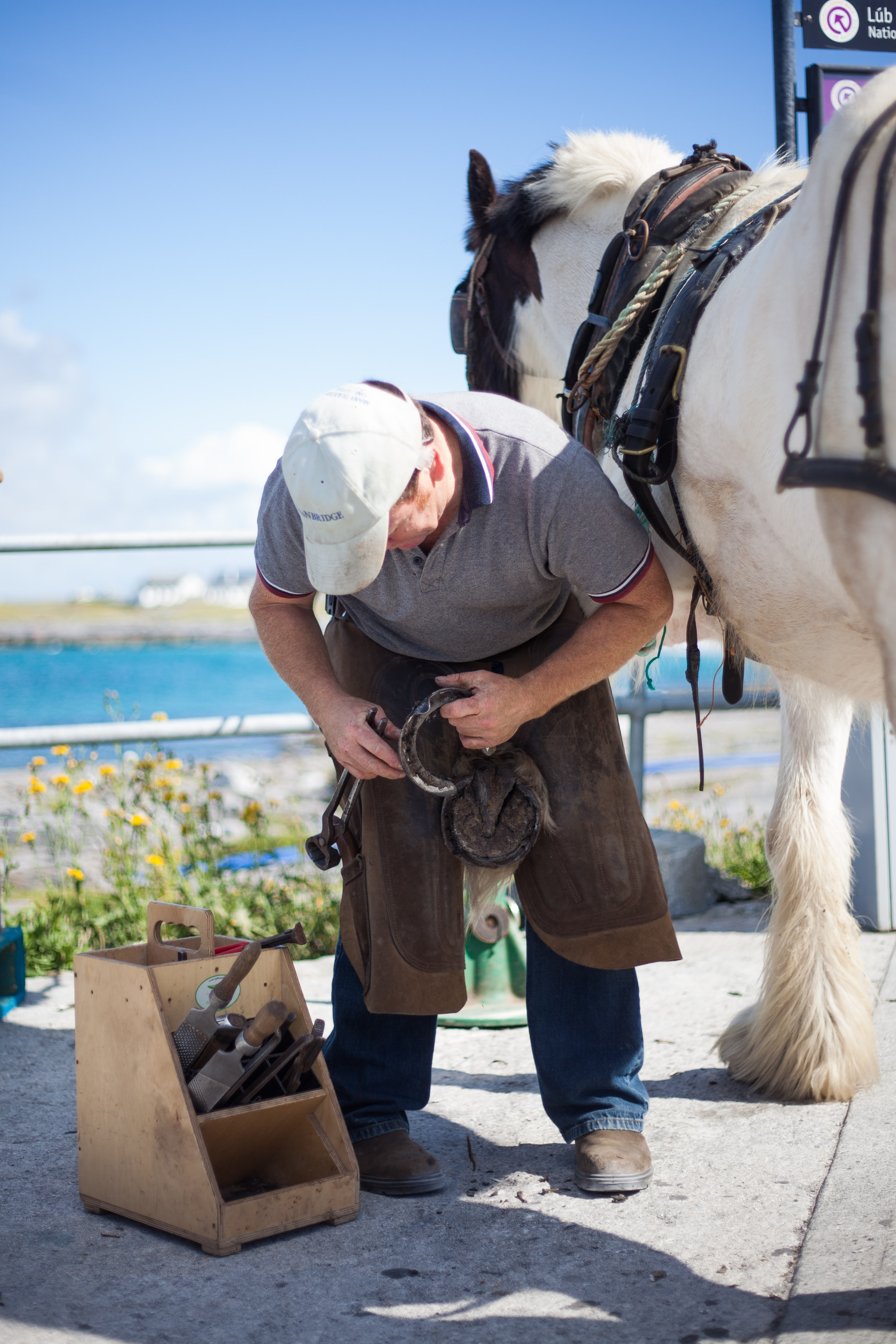 A male farrier is fixing the shoe on a white horse in the Aran Islands.