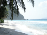 photo of palm tree and beach shore
