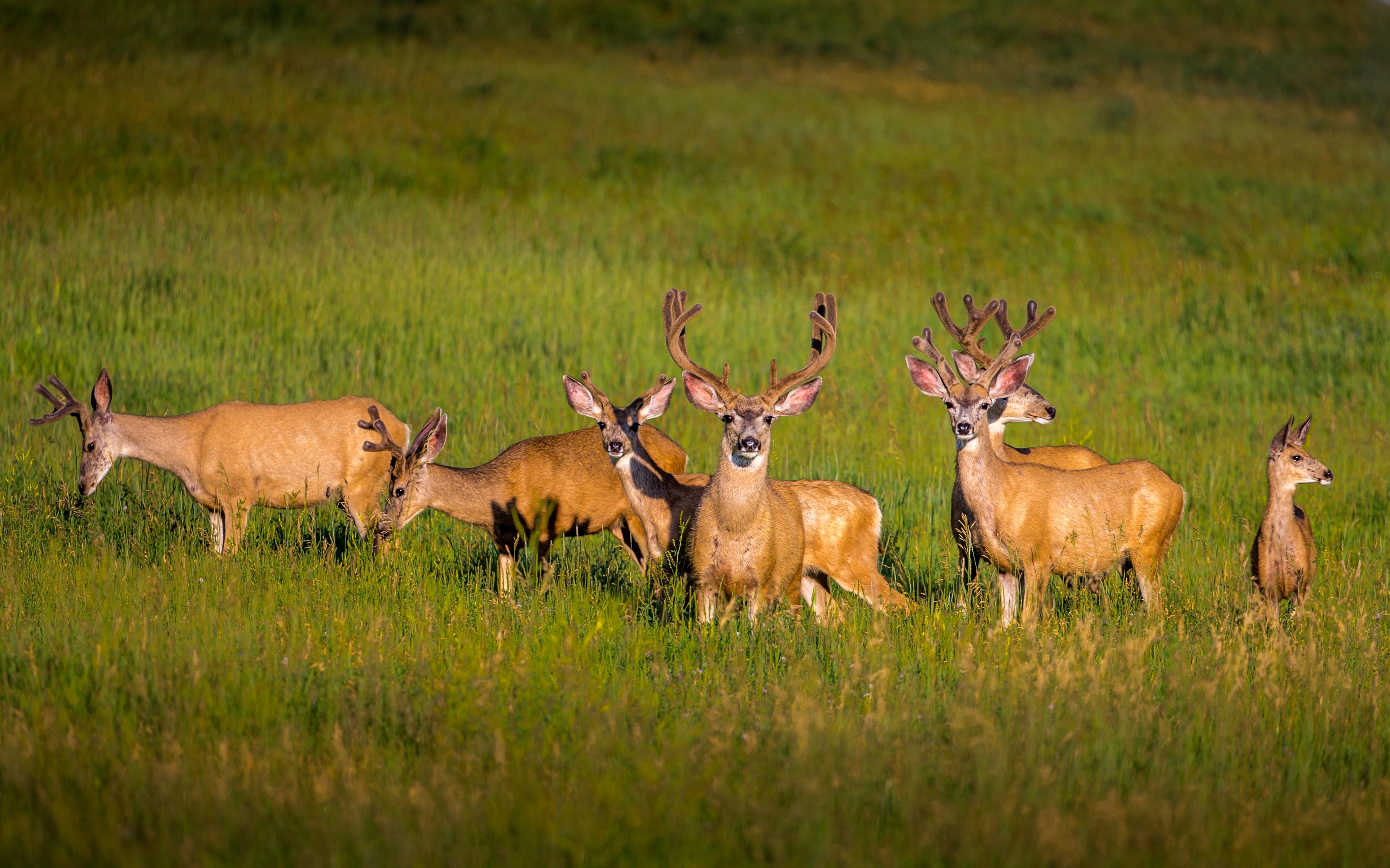 seven brown deer's standing on green grass filled ground