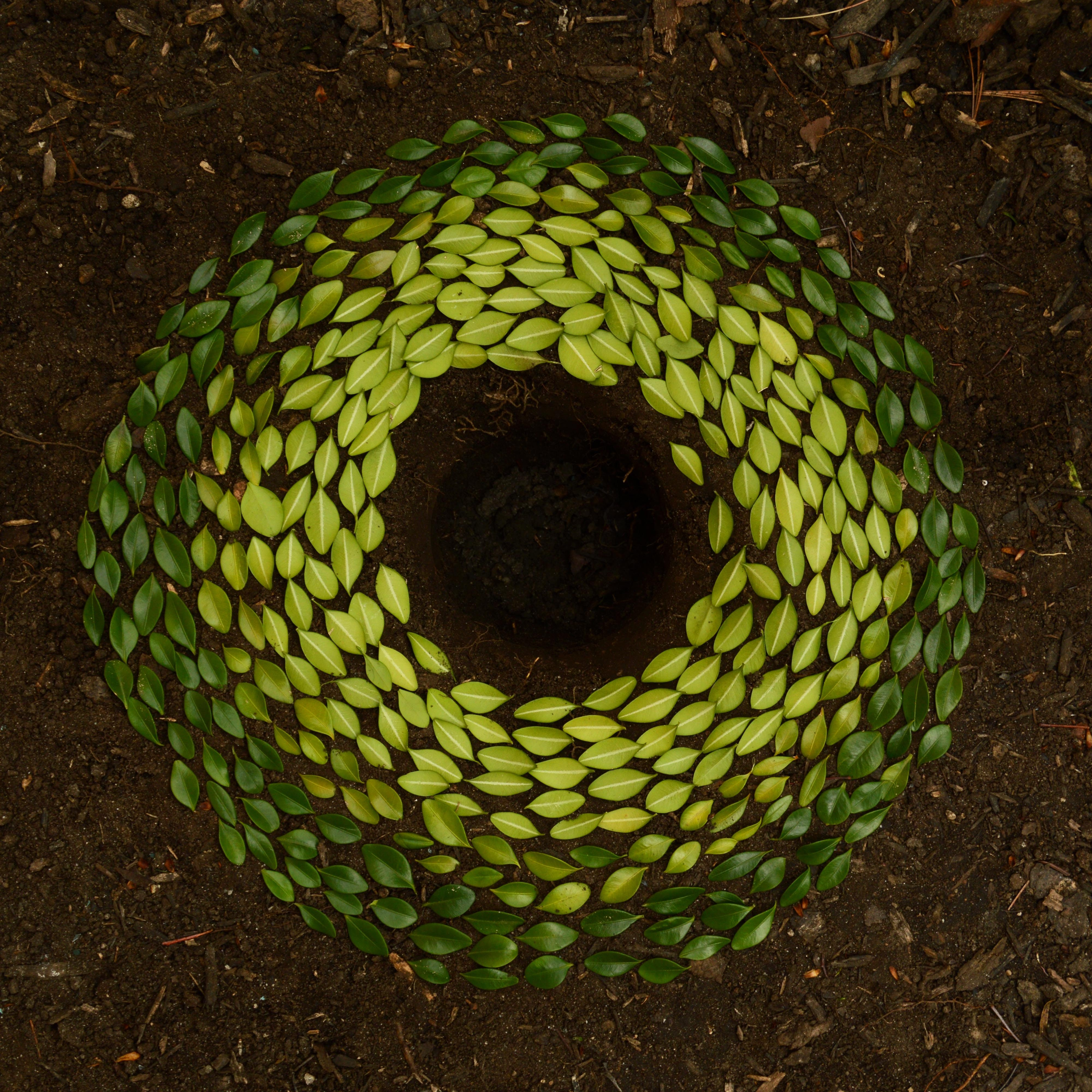 Natural circular art sculpture created using leaves placed around hole in soil ground