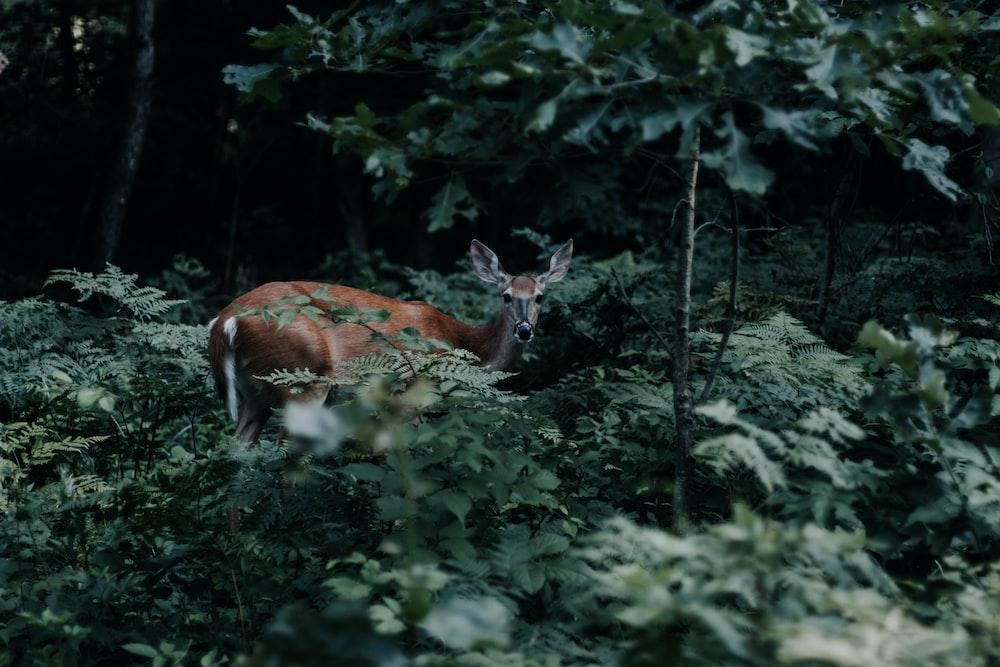 brown deer near green plants