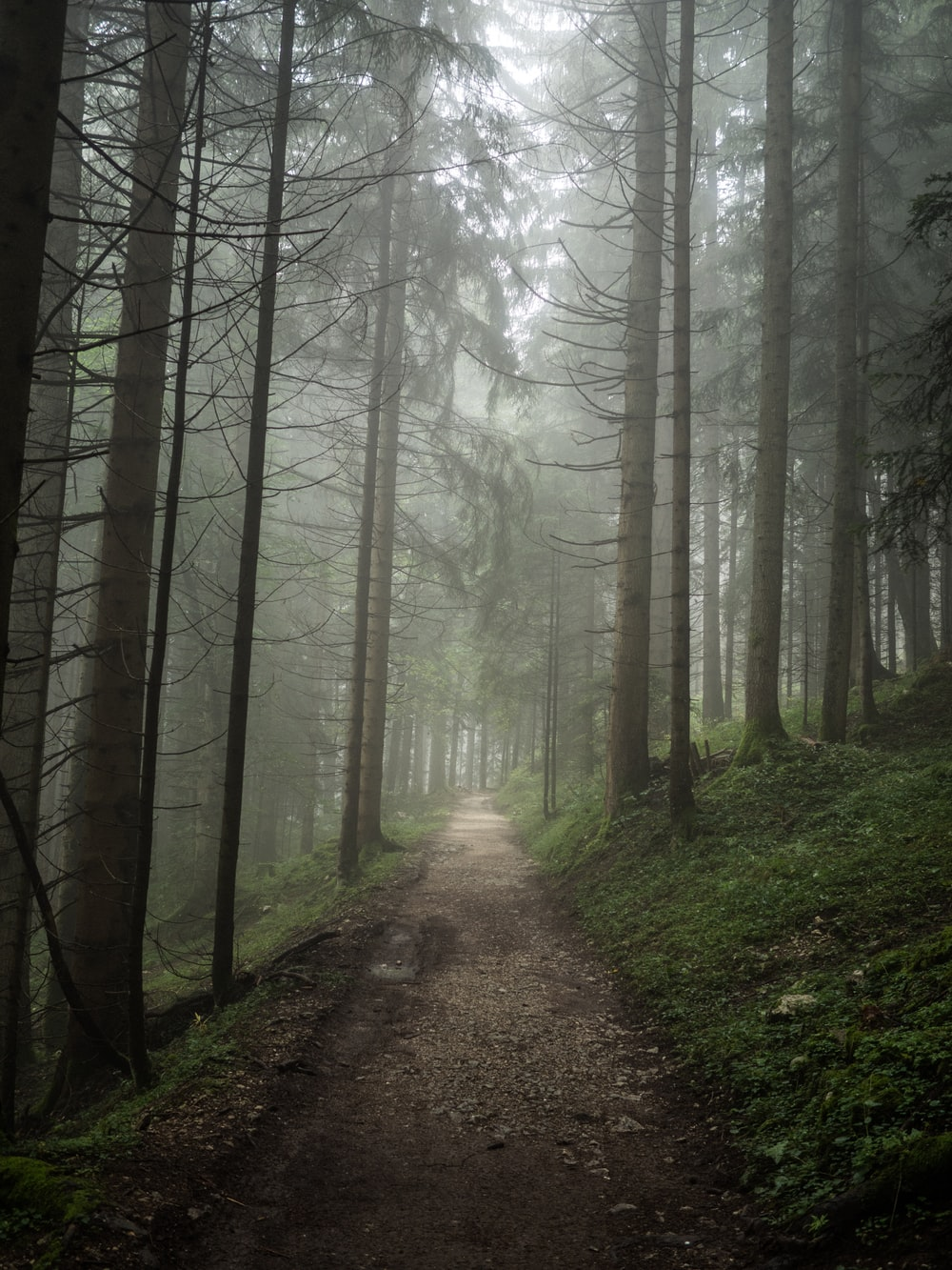pathway along forest during foggy day
