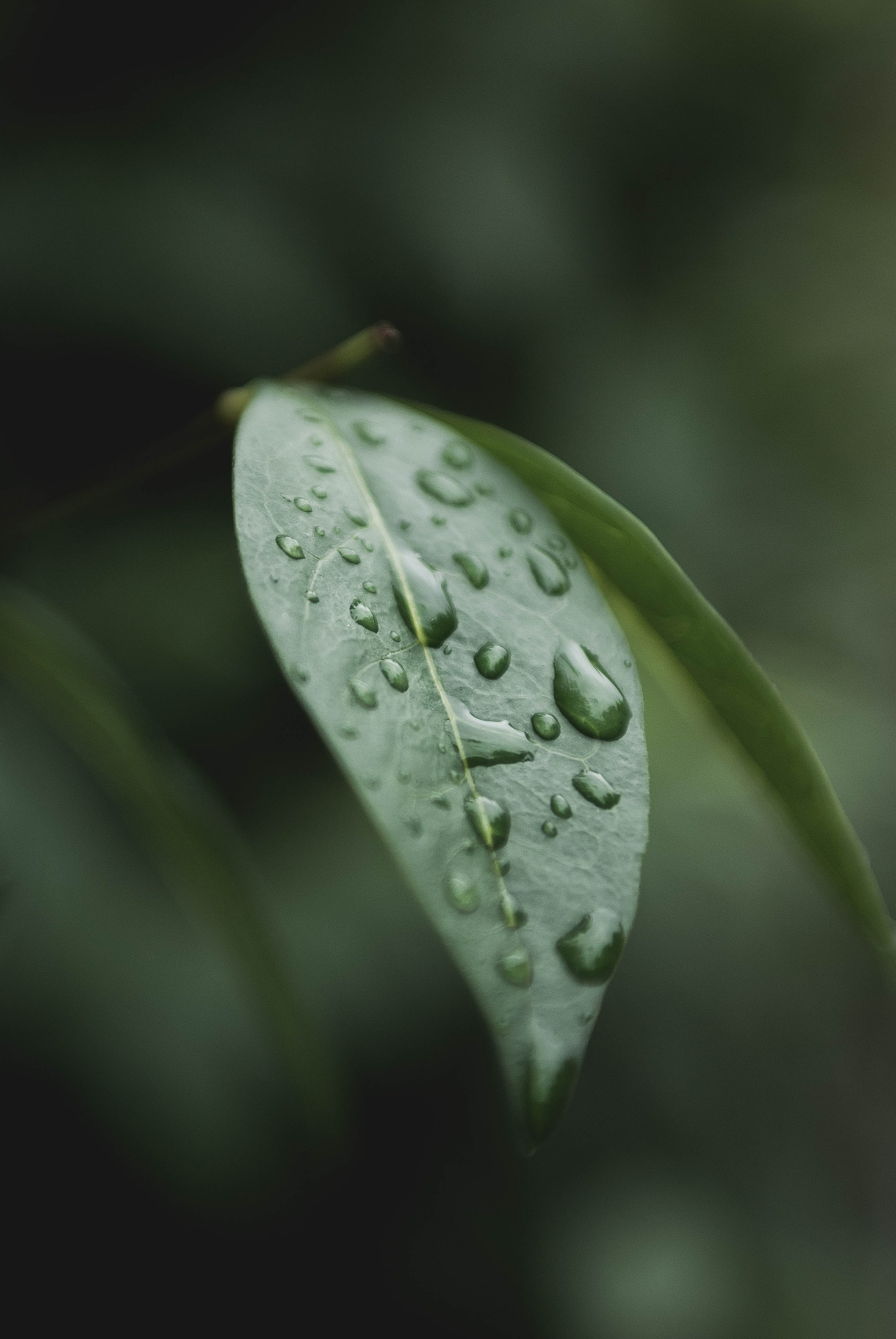 shallow focus of green leaf