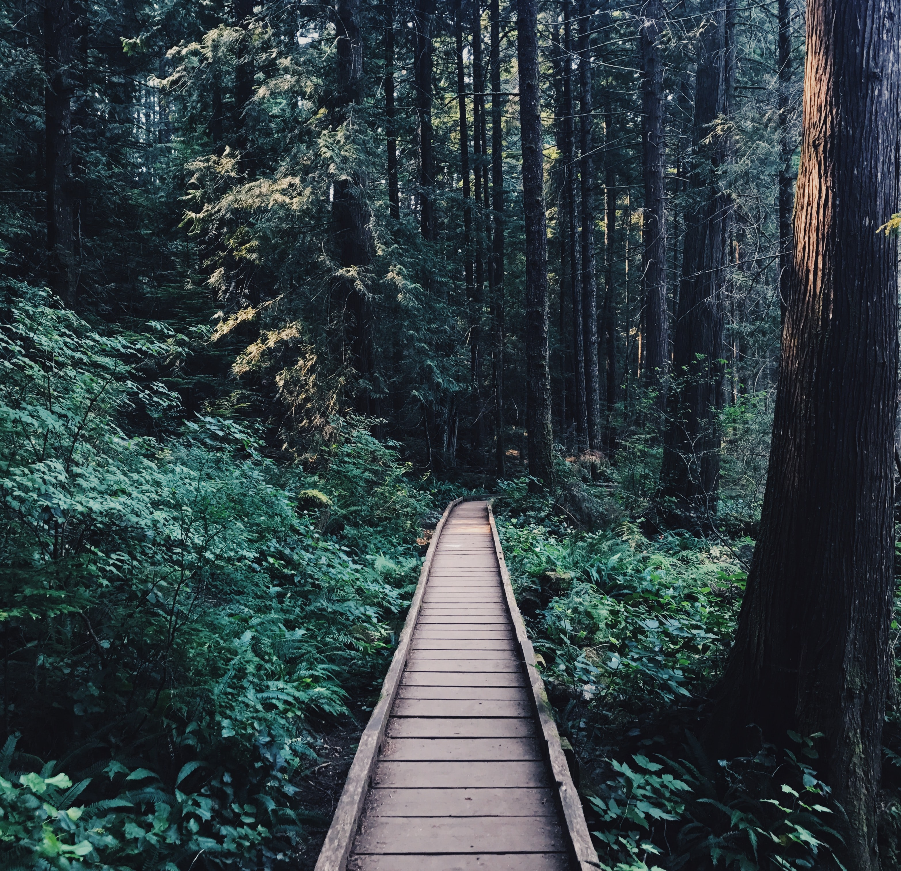 A narrow wooden bridge in a dense forest at Whyte Lake Trail
