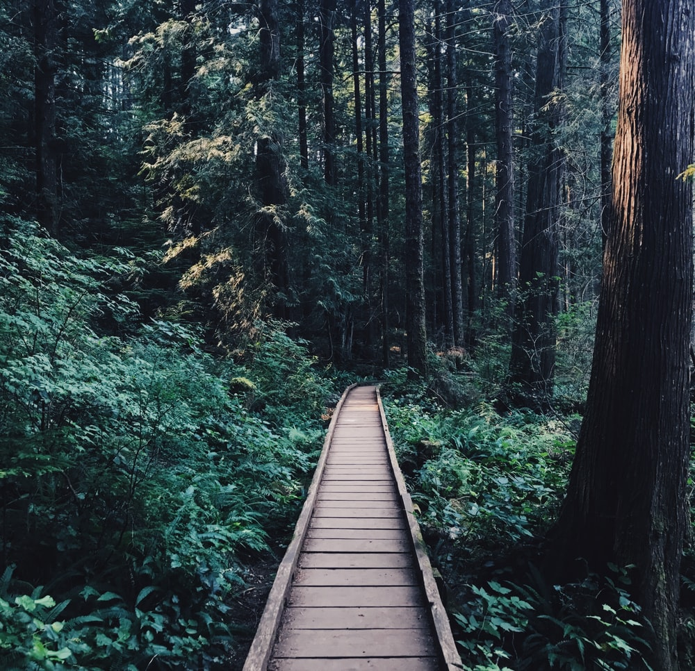 narrow brown wooden pathway near wooden tress