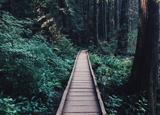 narrow brown wooden pathway near wooden tress