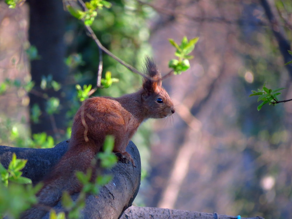 brown rabbit on tree branch