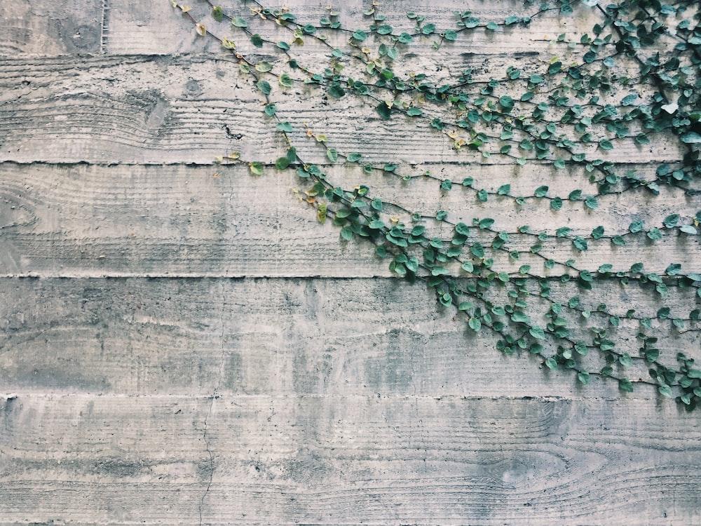 green plants on beige wooden panel