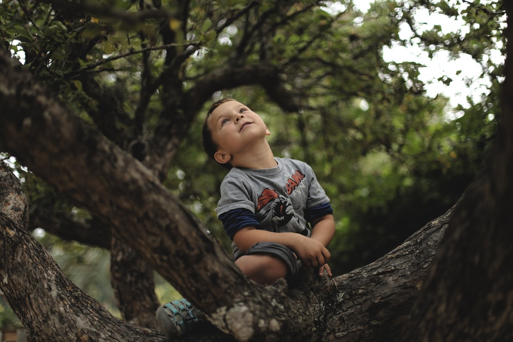 A smiling child sits in a green tree, looking up, on Lopez Island