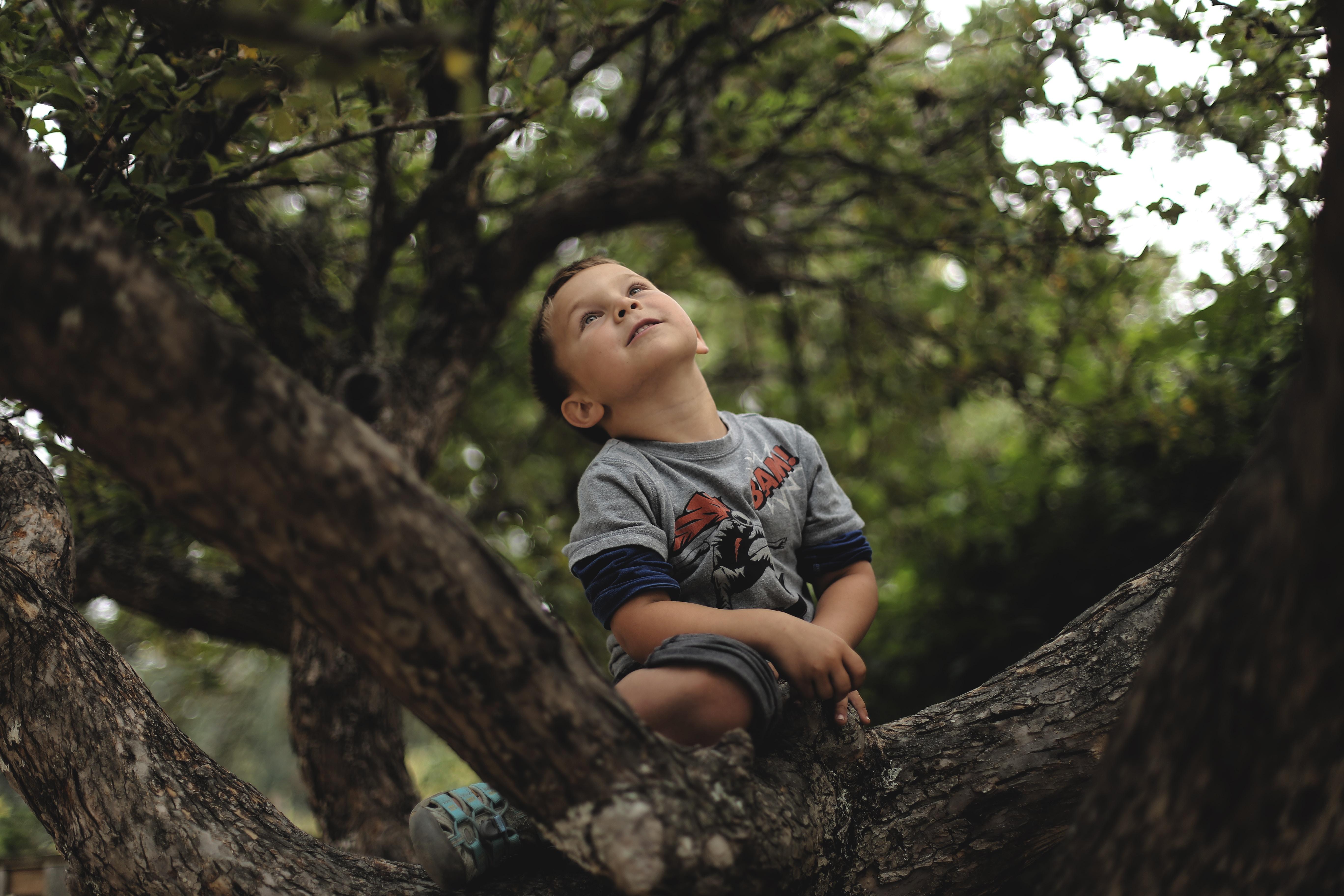 boy climb on tree