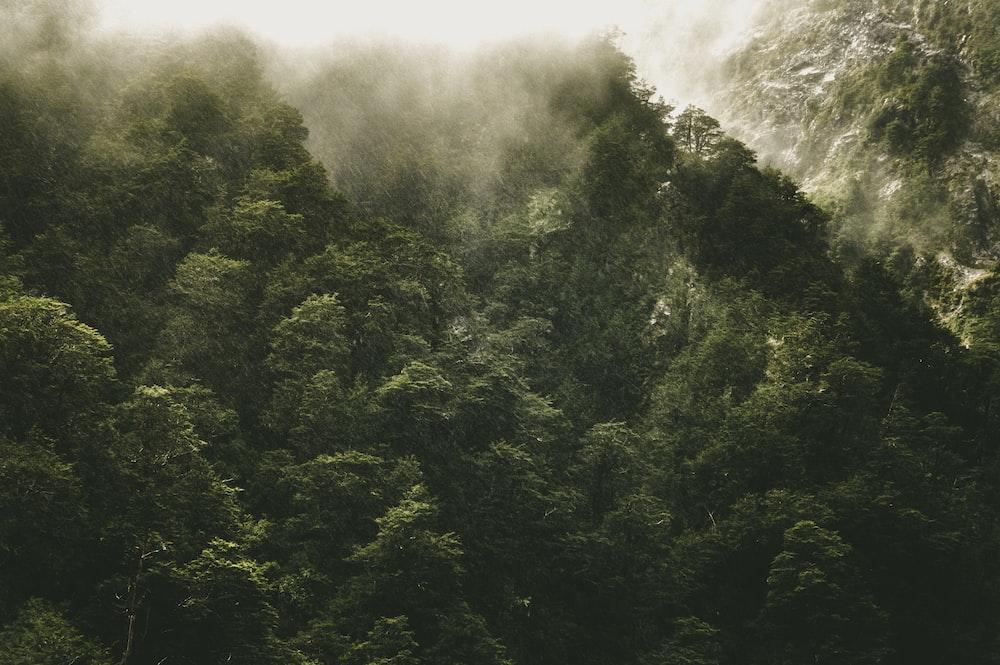 landscape photo of rainforest