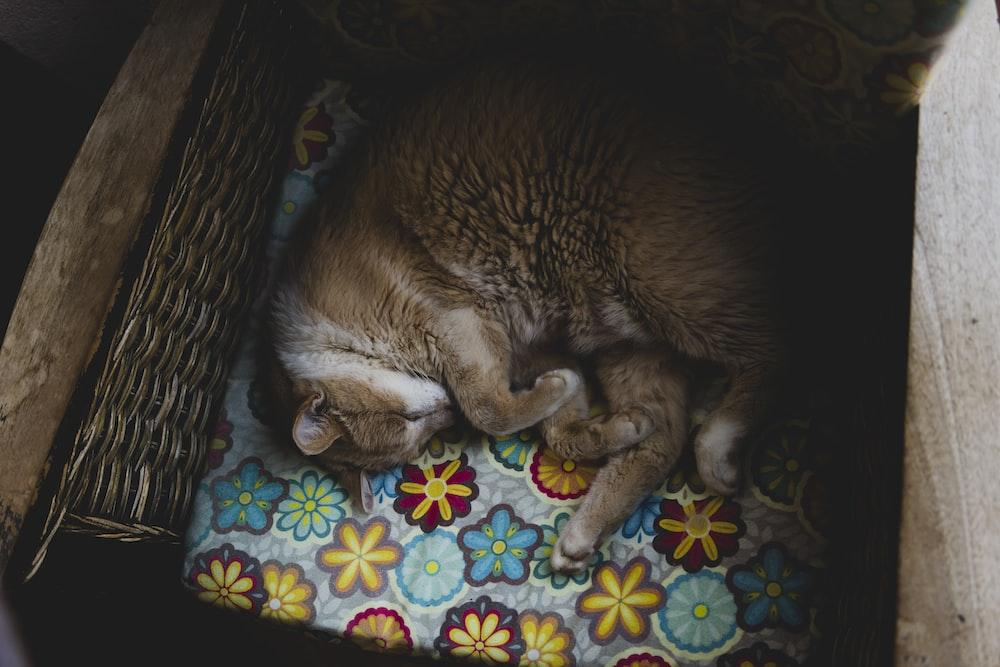brown cat on pet bed