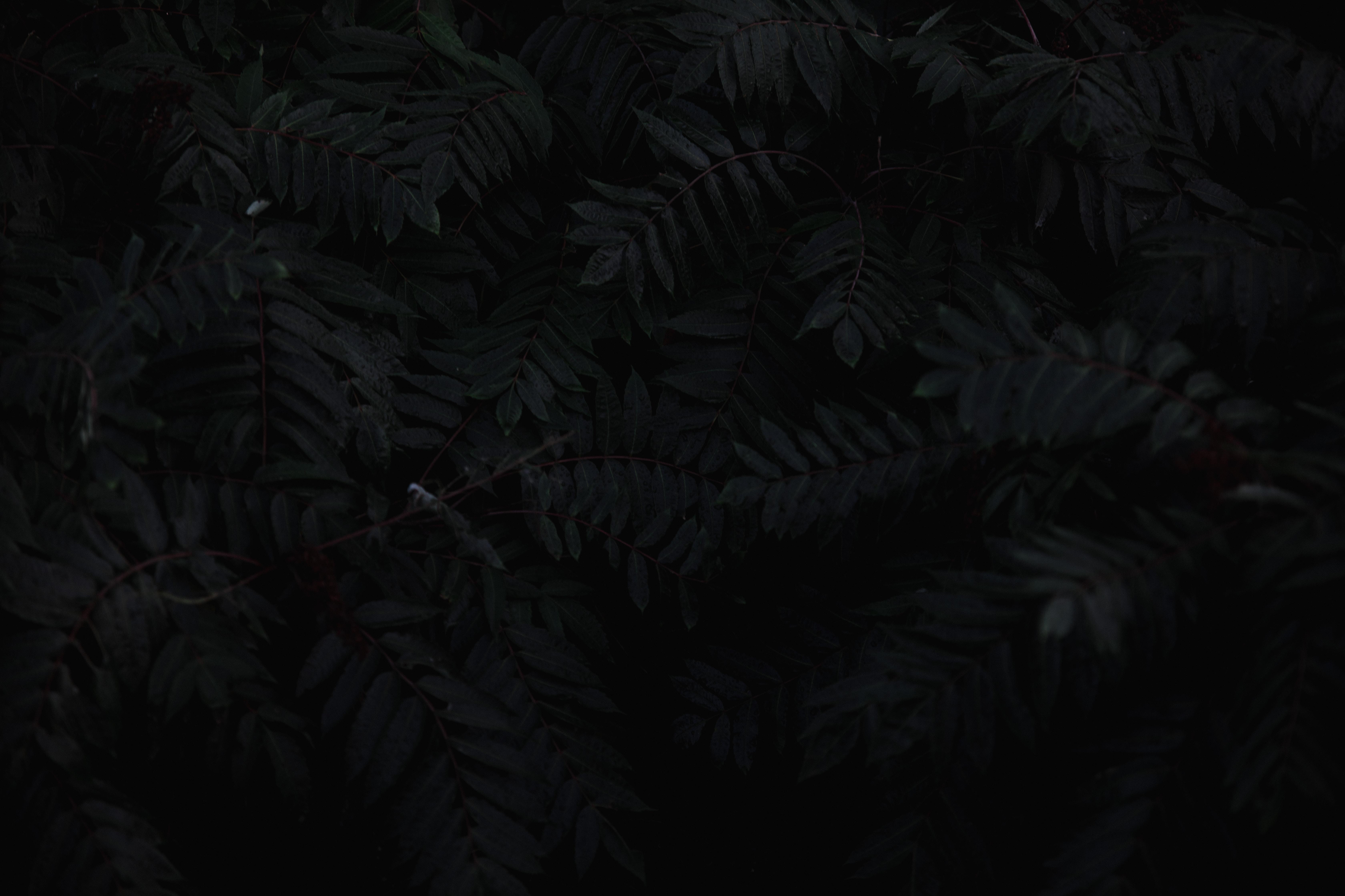 gray leaves