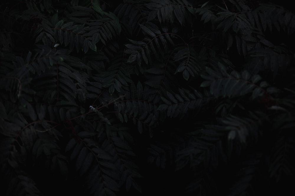 900+ Black Background Images: Download HD Backgrounds On Unsplash