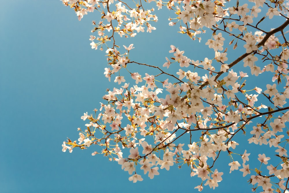 photography of white tree under blue sky