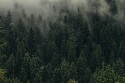 aerial view of pine trees in mist forest teams background