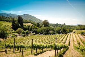 4723. Bor,szőlő, borászatok
