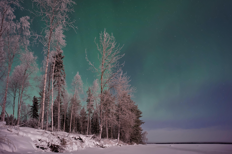 trees and aurora lights photyo