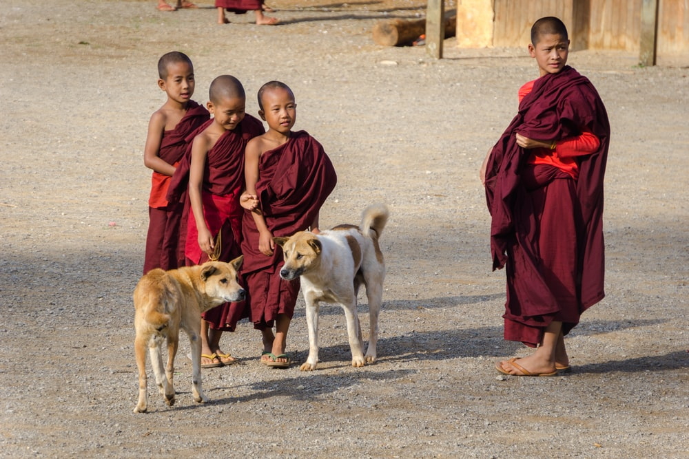four boys wearing red thobes with two dogs on road