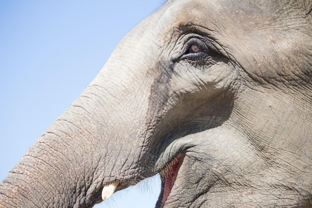 macro shot of elephant