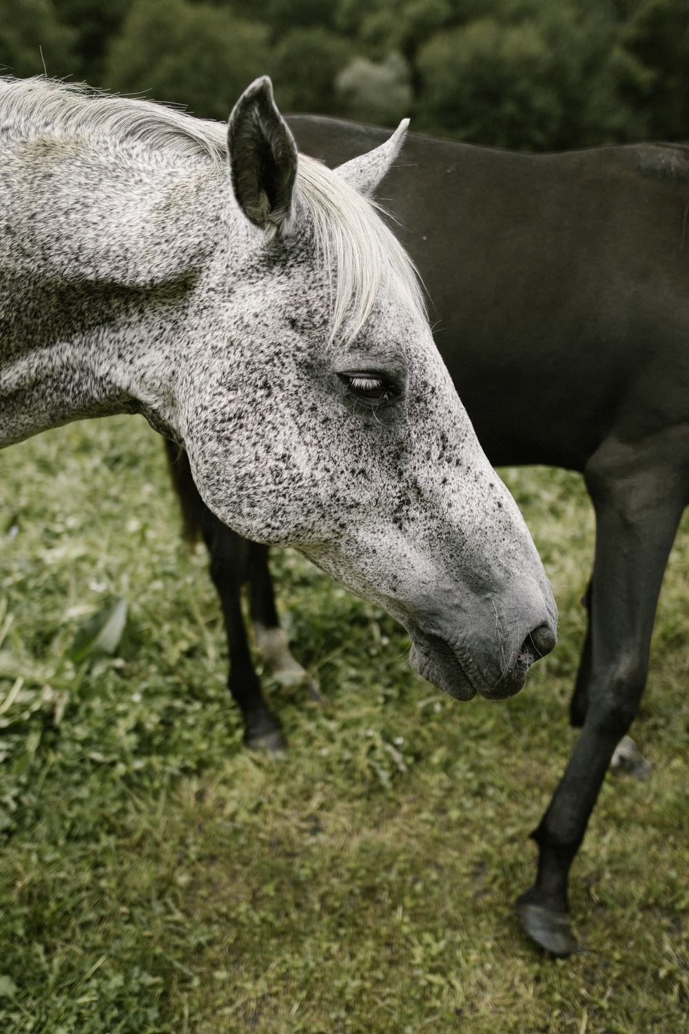 close up photography of horse's head